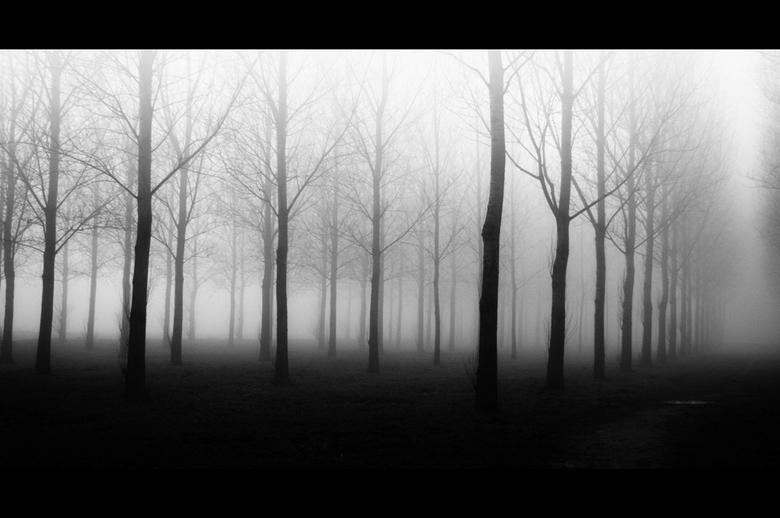 Mist - Mist geeft altijd iets mysterieus
