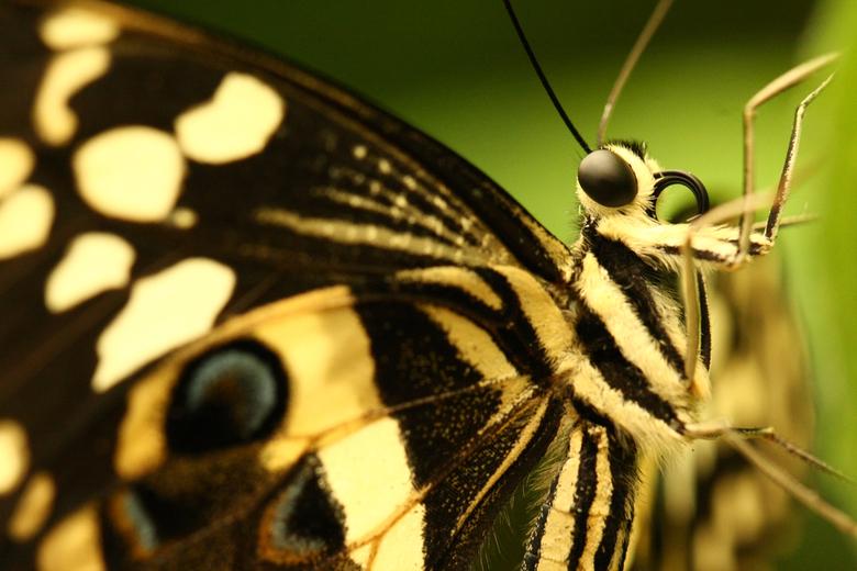 Butterfly 2 -