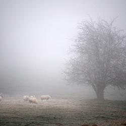 Verschijning in de mist