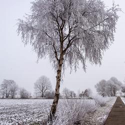 Besneeuwde boom bij Veenhuizen