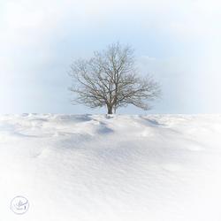 Sneeuw in de Holterberg 2