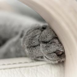 Slapende kattenpootjes