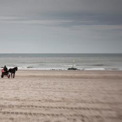 paard en water
