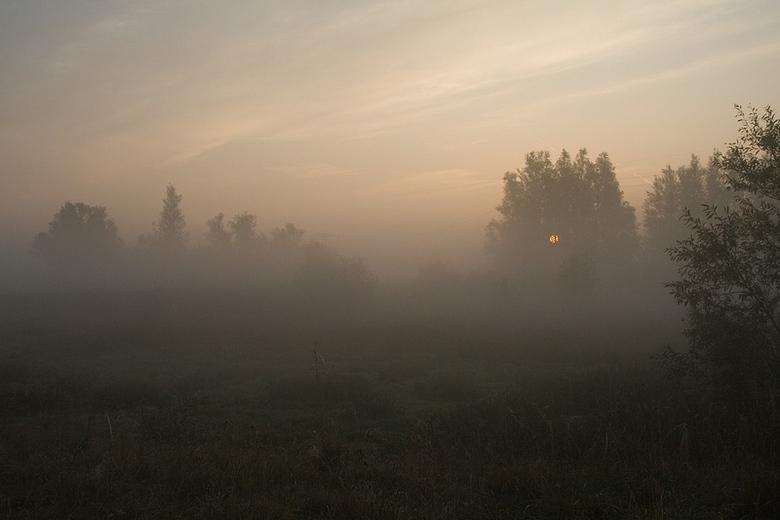 Vroege uurtjes in de Biesbosch -