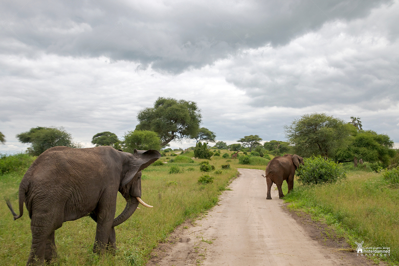 Tanzania - Op safari in Nationaal park Tarangire, temidden van de wilde dieren ... in de verte zelfs een giraf. In Nederland hebben we haaientanden om