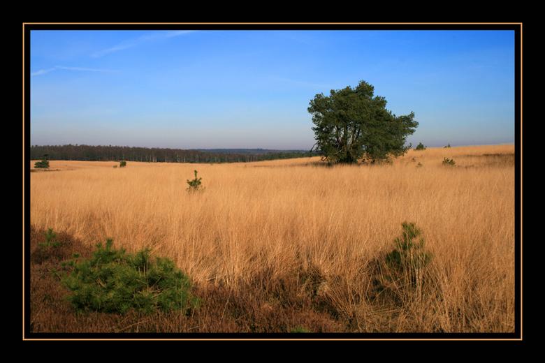 Roosendaalse Veld 2 - Het Roosendaalse Veld is voor mij een van de mooiste plekken op de veluwezoom. Prachtige kleurschakeringen in een wijds landscha