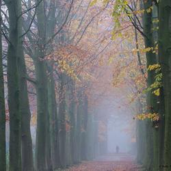 Laan in de mist