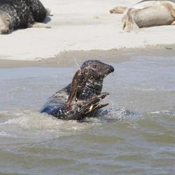 zeehonden safari