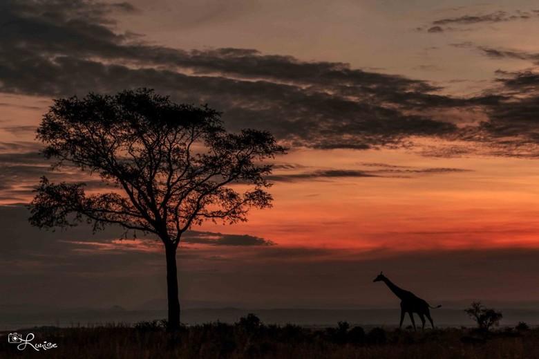 Zonsondergang Oeganda - Murchisonfalls NP Oeganda
