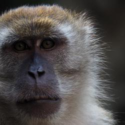 Monkeyface - Kuala Lumpur, Malaysia