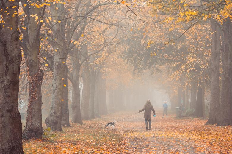 Uitgelaten - De Herfst is bijna over maar afgelopen vrijdag kregen we nog een geweldige toegift, mist met herfstkleuren! Een mooi moment om met mijn t