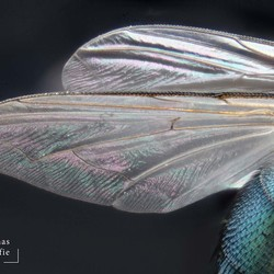 Vleugels van een vliegje