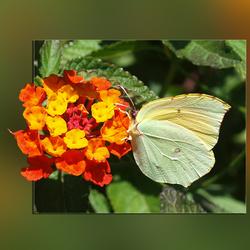 Een vlinderparadijs.