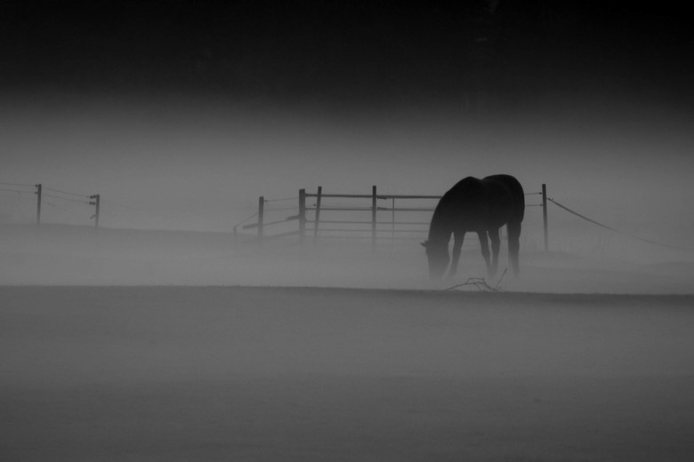 Horse in the Mist - Horse in the Mist