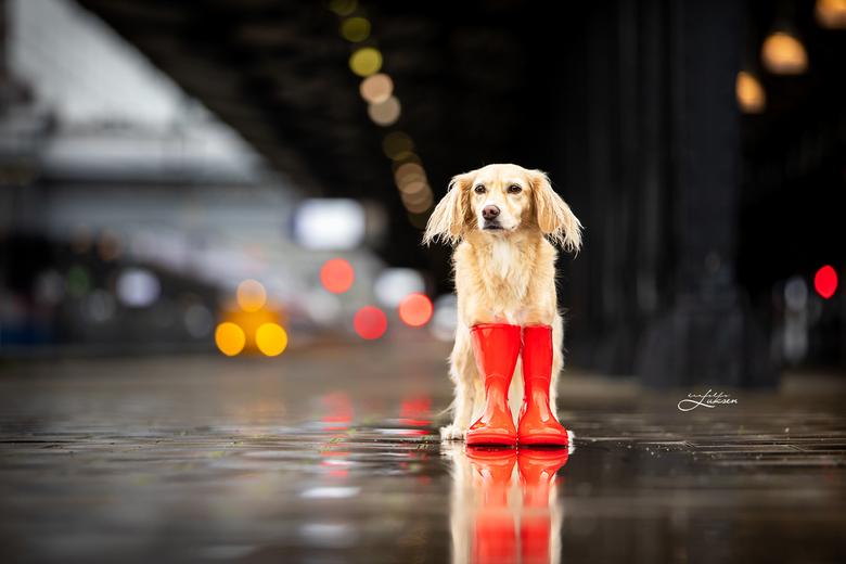 Let it rain - Deze hond is helemaal klaar voor de herfst met haar rode regenlaarsjes. Op het treinstation, waar veel plassen lagen, kwam de herfstsfee