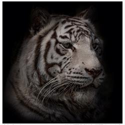 De witte tijger (2)