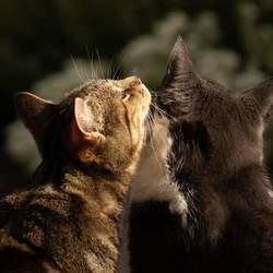 Ik wil een knuffel...