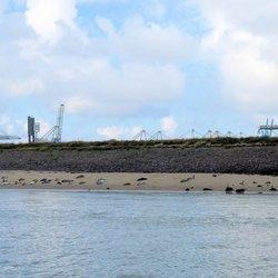 P1410526 H v H Beereiland met zeehonden 1 sept 2016