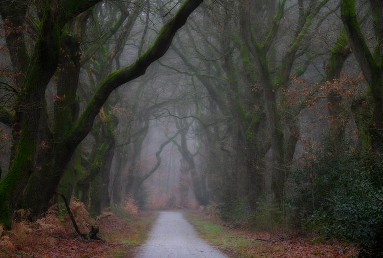 Mist in het bos -