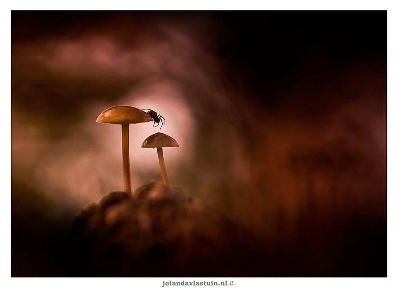 De oversteek - Piepkleine paddenstoeltjes op een dennenappel. Het spinnetje kwam er ineens onder vandaan gekropen.