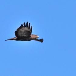 Bird fly high 2