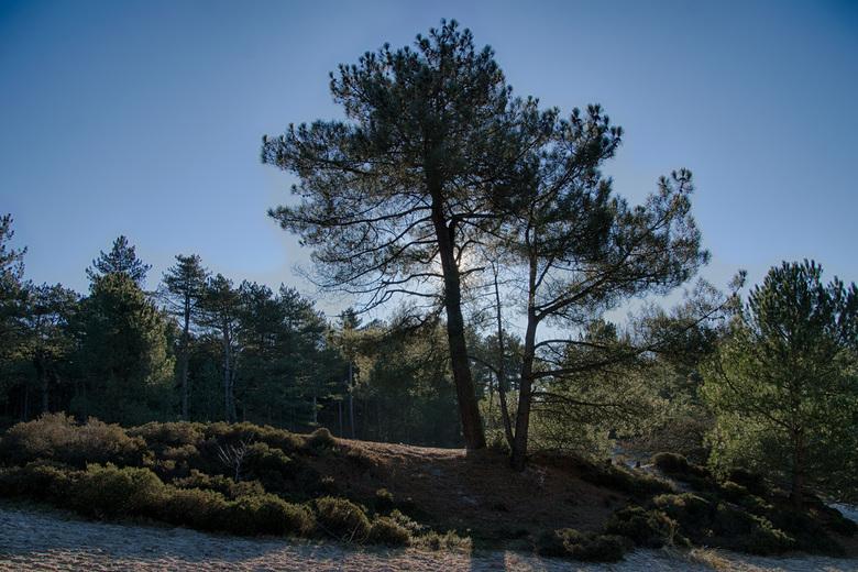 """heerlijk tegenlicht in de natuur - lekker tegenlicht van de zon, tegengehouden door een boom. Geeft toch altijd weer een fraai plaatje <img  src=""""/ima"""