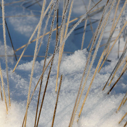 gras in sneeuw