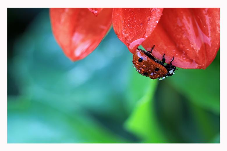 Red &amp; Wet - Bedankt voor jullie reacties op mijn vorige foto.<br /> <br /> Groet Patrick.