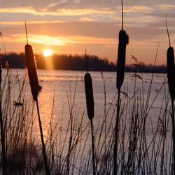 stille ochtend zon