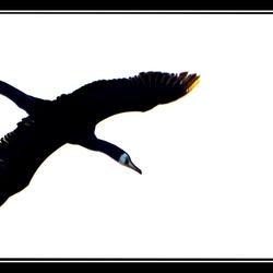 The successful Icarus