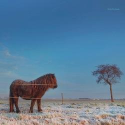 Brrrrrr... bevroren paard.