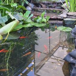 Vissen en waterval in eigen aangelegde vijver.