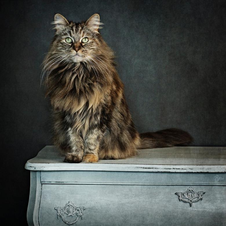 My Feline Soulmate