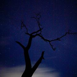 Dode boom en sterrenhemel