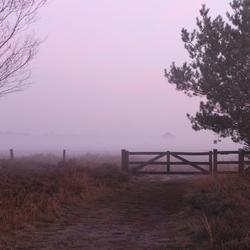 Mist(er)y Morning