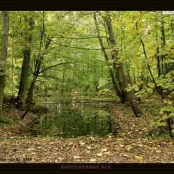 Herfst in het bos III
