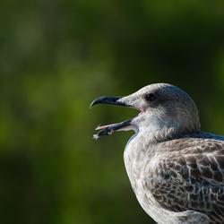 Bird in Croatia