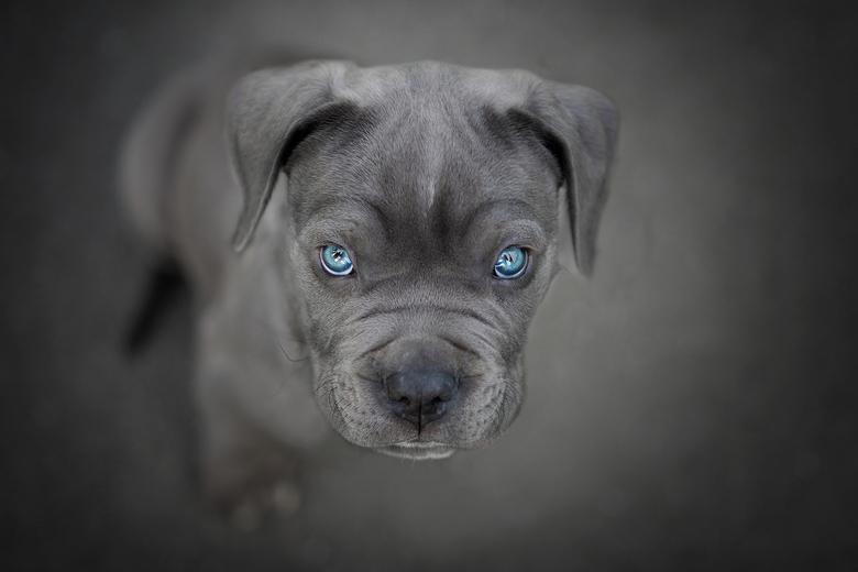 Mr Blue eyes.... -