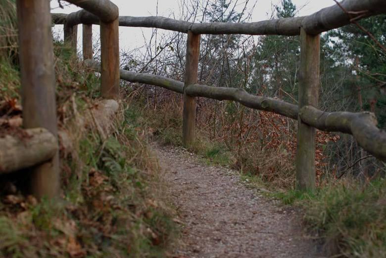 Around the Forest-2.jpg - Het pad naar de uitkijktoren op de Emma-Piramide.