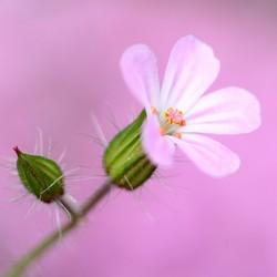 Mini bloem voelt zich groots