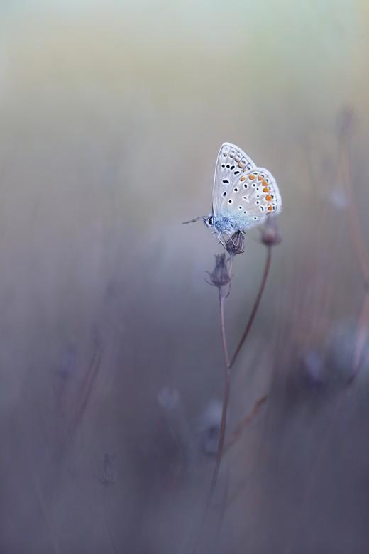 blauw - van de vogeltjes naar de veldjes in de natuur ...genieten van die andere liefde.macro
