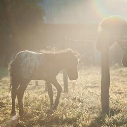 Pony veulentje