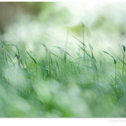 Green Rhytmn