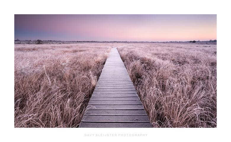 Cold endless path - Een bevroren vlonderpad in het Haaksbergerveen in de vroege ochtend