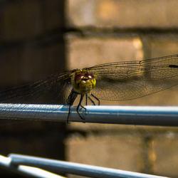 libelleaandelijn.jpg
