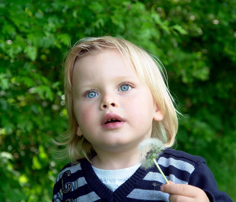 "Dreamy eyes - Kleinzoon Mick van 2 jaar<br /> is helemaal dol op blaasbloemen ,hij kan dr helemaal dromerig van worden <img  src=""/images/smileys/smi"