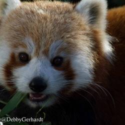image.jpgrode panda