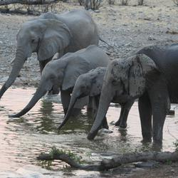 Halali waterhole, Namibia