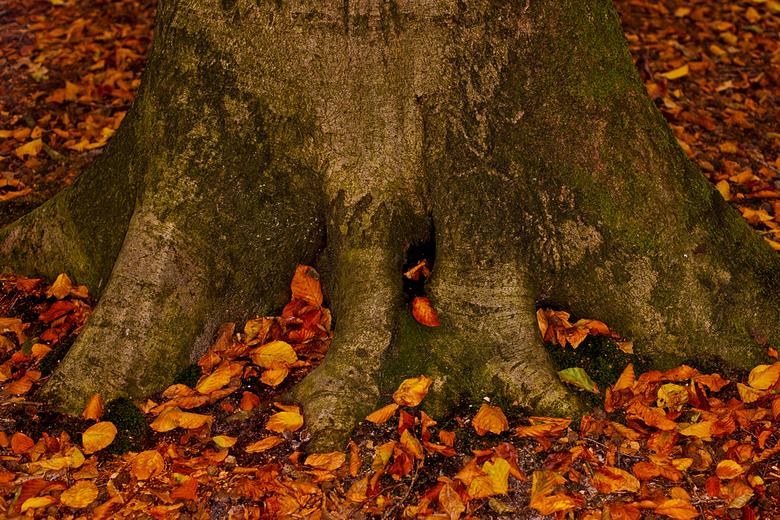 Herfst - Een plezier om in het bos met de hond te wandelen met al die prachtige herfstkleuren.