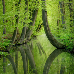 Curved Trees